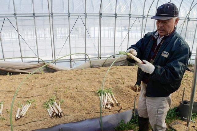 【やまぶき】季節の会津野菜