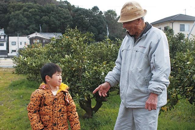 【やまぶき】えひめ柑橘プチギフト