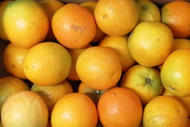 【わかたけ】柑乃屋の季節の柑橘詰め合せ