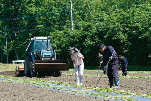 【ふじ】とかち清水産の北海地鶏キーマカレー