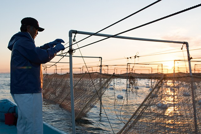 【やまぶき】海苔師の生のり佃煮ギフト