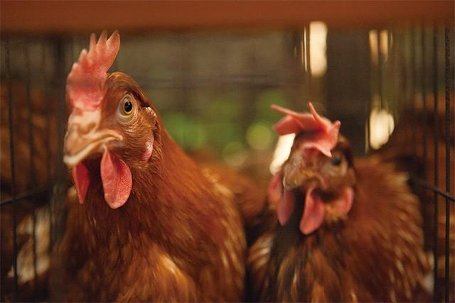ヤマサキ農場 究極の卵かけご飯ギフト
