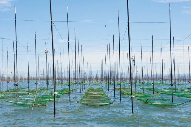 【朝顔】熊本有明海産一番摘み海苔