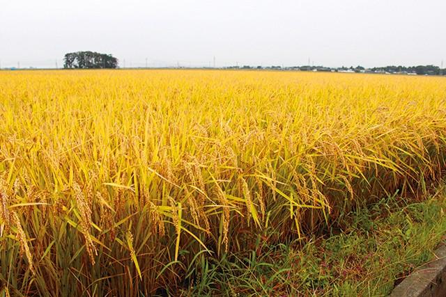 山形のコメ農家が作る!お米のかりんとう6種セット